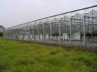 臺州農科院玻璃溫室